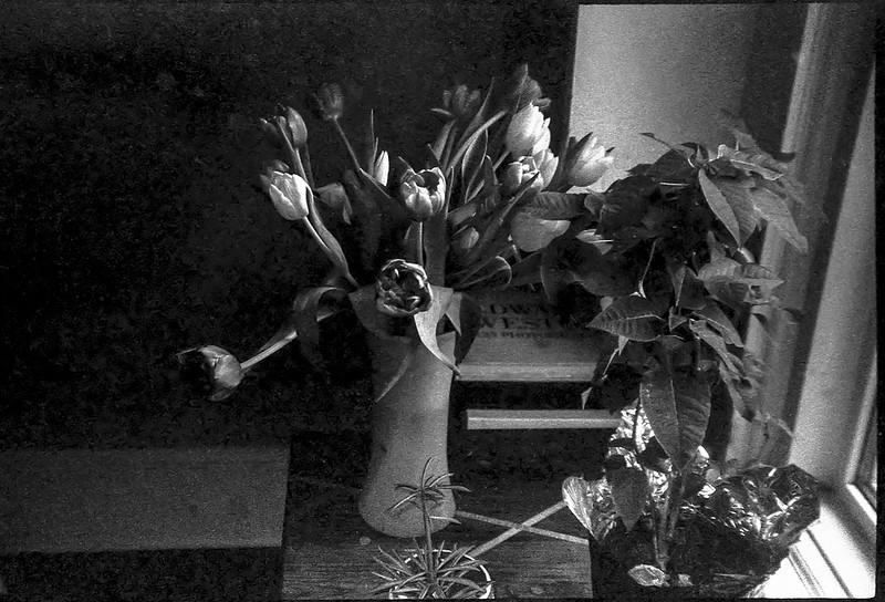 tulip bouquet, orchid, window, Asheville, NC, Rollei Prego 140, Fomapan 200, HC-110 developer, 9.24.20