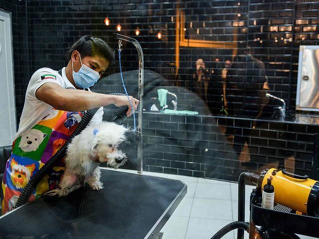 5770 The first dog café of Saudi Arabia opens in Khobar 15