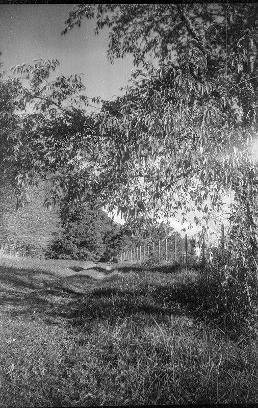 tree forms, grassy pathway, fence, late light, light leaks, Biltmore Estate, Asheville, NC, Brownie Target Six-20, Rollei Super Pan 200, HC-110 developer, 10.6.20