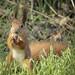 A cute squirrel eats an acorn.