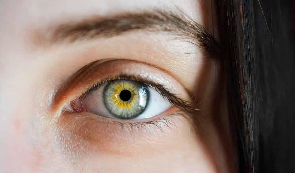 une-thérapie-génique-restaure-les-fonctions-visuelles