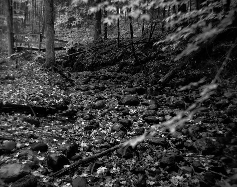 Stones, Leaves, Creek