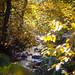 Autumnal AF