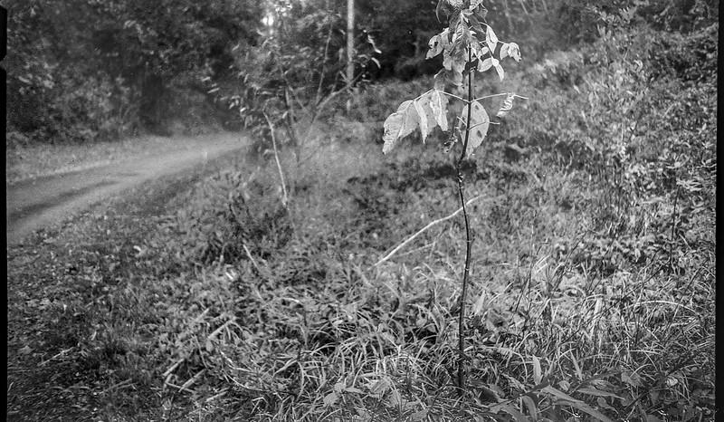early autumn landscape, pathway, Hominy Creek RIver Park, Asheville, NC, Kodak Bantam, 828 film camera, arista.edu 200 re-spooled, Moersch Eco FIlm Developer, 10.123.20