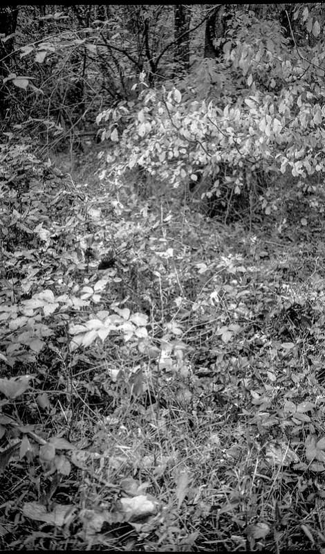 forest's edge, autumn, Hominy Creek RIver Park, Asheville, NC, Kodak Bantam, 828 film camera, arista.edu 200 re-spooled, Moersch Eco FIlm Developer, 10.123.20