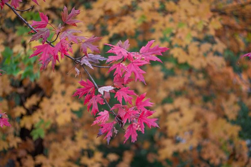 Fall photos44