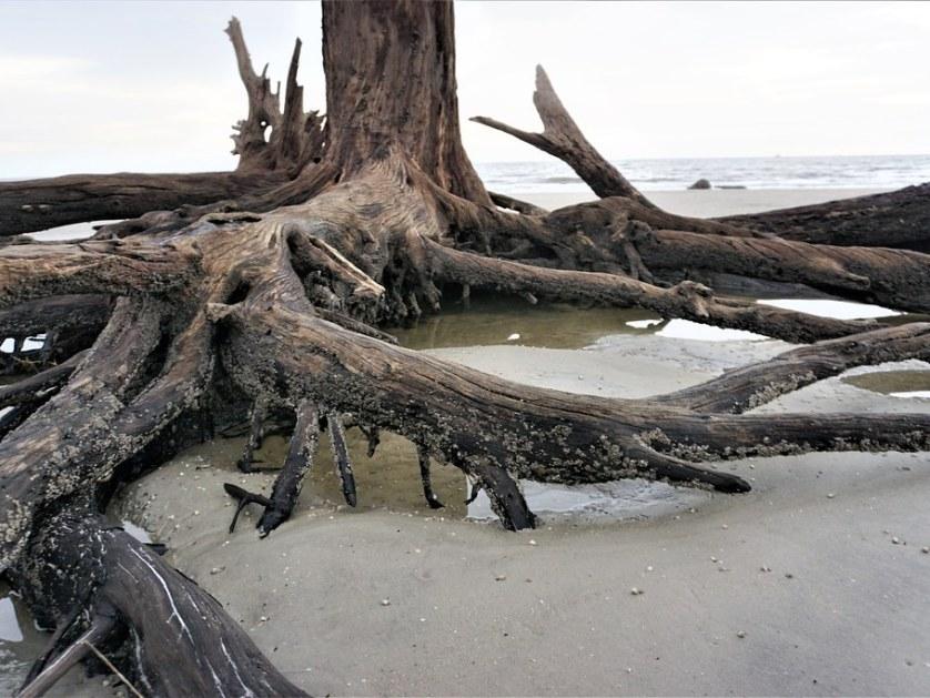 Driftwood Beach, Jekyll Island, Ga., Oct. 2020