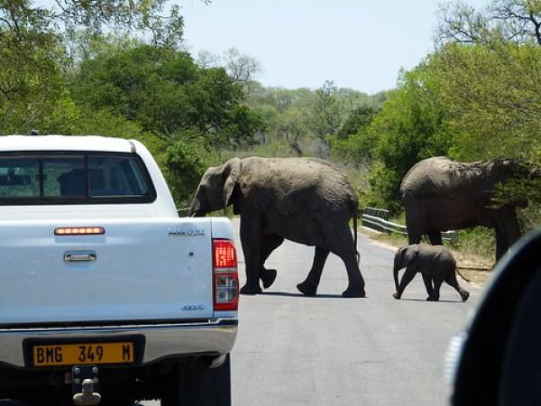 Kruger traffic jam