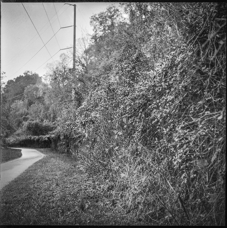 pathway, powerline, urban park, Hominy Creek River Park, Asheville, NC, Ricohflex Dia M, Arista.Edu 400, HC-110 developer, 10.23.20