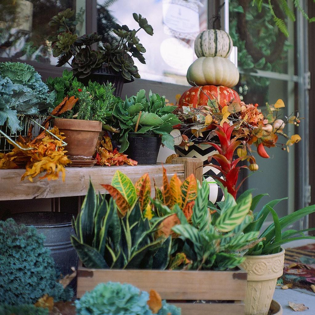 Autumn flower boxes