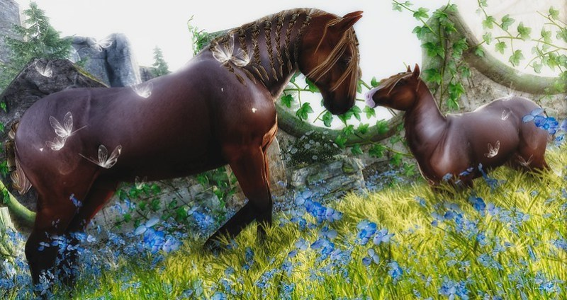 """Spotlight on The Horse Show Sales Event - Hosted by Teegle! - """"Guinness & Peanut"""""""