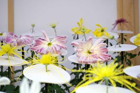 一文字菊と管物菊 Ichimonji chrysanthemum and tube chrysanthemum