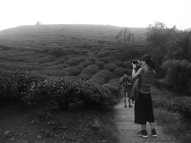 【一日獨生女】與zozo三人行:嘉義梅山太平雲梯、太平老街、雲之南步道、再訪「咖啡漫步」(16.2ys)