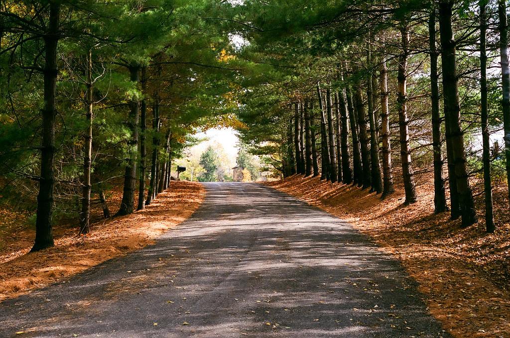 Tree tunnel in autumn