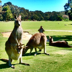 Melbourne Australia adventure