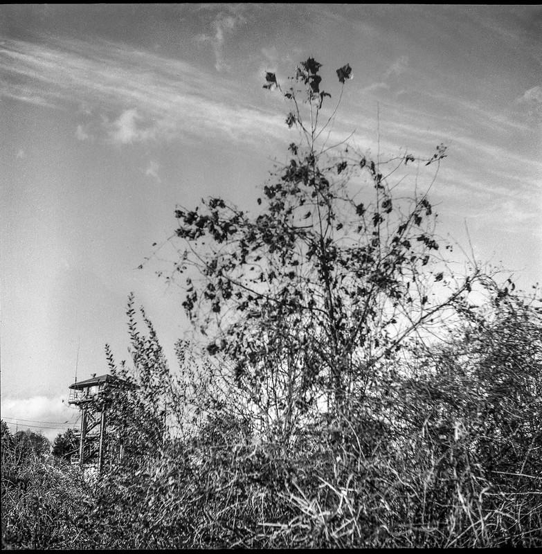 dried sapling, vegetation, distant watch tower, cloud forms, near dusk, Norfolk and Southern Railway, Asheville, NC, Ricohflex Dia M, Foma 200, Moersch Eco developer, 11.17.20