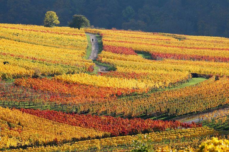 vineyard color explosion