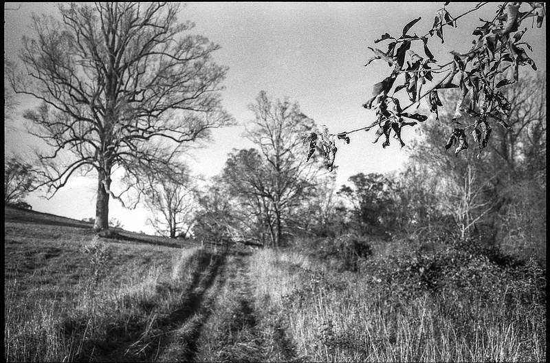 landscape at Biltmore Estate, trees, hillside, dirt roadway, foreground leaves and branches, Asheville, NC, Minolta XG-M, Super Albinon 28mm f-2.8, Arista.Edu 200, Moersch Eco developer, 11.22.20