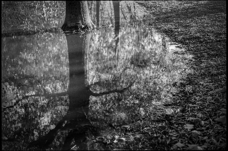 flooded landscape, tree trunk, refelctions, French Broad River, Biltmore Estate, Asheville, NC, Minolta XG-M, Super Albinon 28mm f-2.8, Arista.Edu 200, Moersch Eco developer, 11.22.20