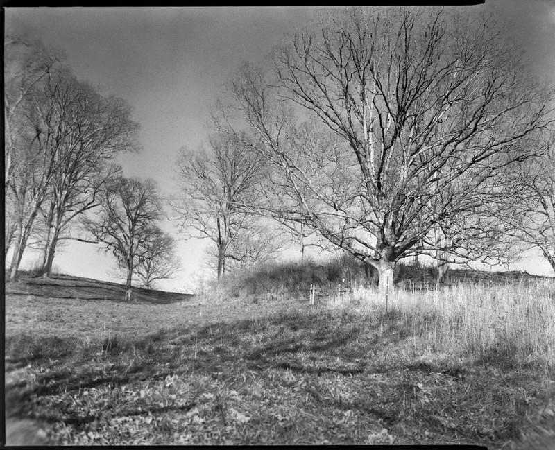 looking uphill, trees and grasses, winter, Biltmore Estate, Asheville, NC, Graflex Crown Graphic, C P GOERZ DOGMAR 125 mm f4.5, Fomapan 400, HC-110 developer, 12.5.20