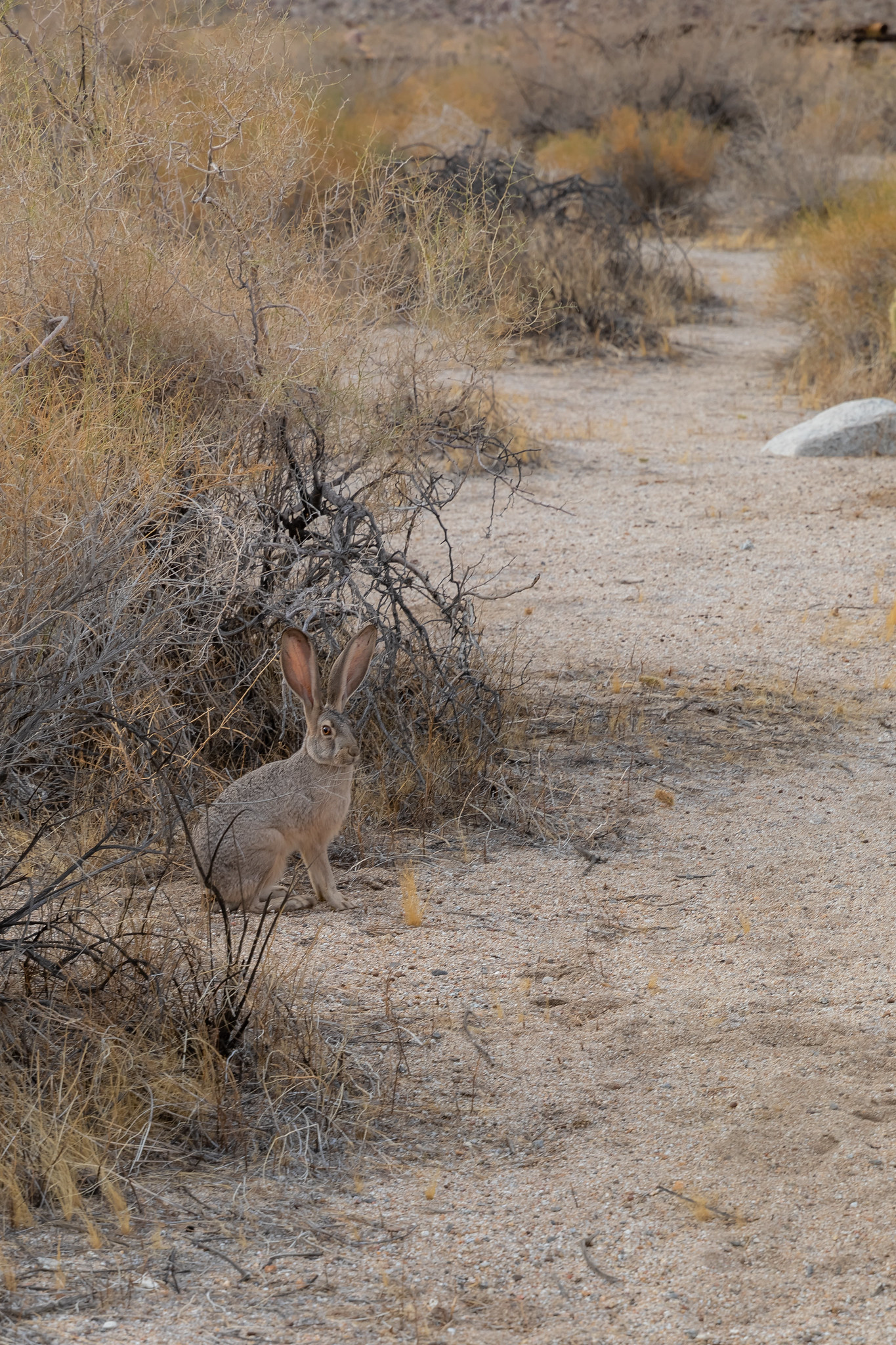 11.22. Anza Borrego State Park