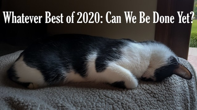 "Text says ""Whatever Best of 2020: Can We Be Done Yet?"" and the photo is of Smudge mashing his face into a blanket."