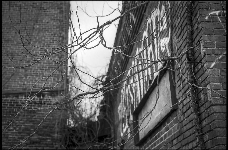 bare branches, entwined, abandoned brick mill, graffiti, river district, Asheville, NC, Minolta XG-M, Super Albinon 28mm f-2.8, Ilford FP4+, Moersch Eco film developer, 12.17.20