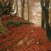 Caminando entre colores