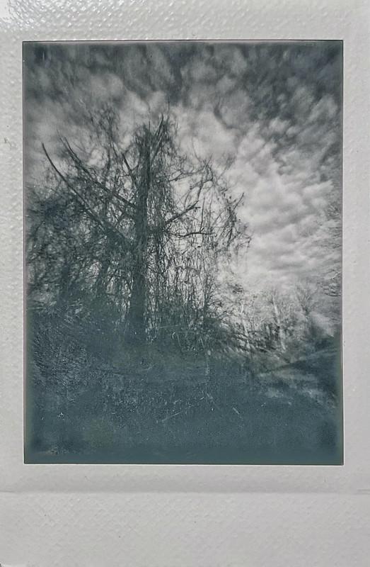 winter landscape, bare trees, patterned coulds, near dusk, Biltmore Estate, Asheville, NC, Lomo'Instant, Instax Mini Monochrome film, 12.29.20