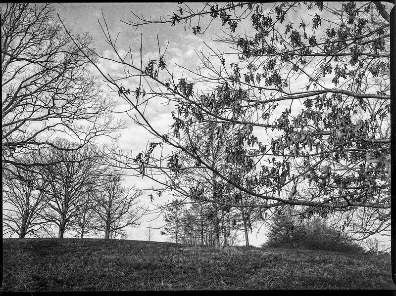 winter landscape, bare branches, dried leaves, uphill, backlit, Biltmore Estate, Asheville, NC, Mamiya 645 Pro, mamiya sekor 45mm f-2.8, Fomapan 400, HC-110 developer, 12.29.20