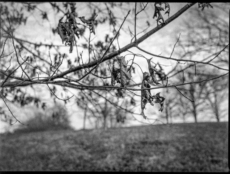 through the branches, dried leaves, backlit, hillside, Biltmore Estate, Asheville, NC, Mamiya 645 Pro, mamiya sekor 45mm f-2.8, Fomapan 400, HC-110 developer, 12.29.20