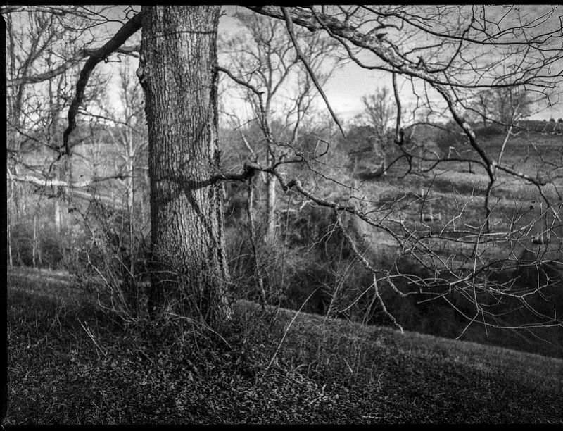 through the tree limbs, rolling hillside, winter landscape, Biltmore Estate, Asheville, NC, Mamiya 645 Pro, mamiya sekor 45mm f-2.5,  Fomapan 400, HC-110 developer, 12.29.20