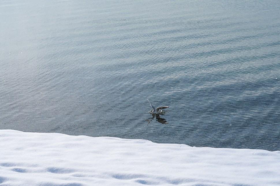 Sightseeing Walk Snow Lake Constance Friedrichshafen January 2021 Blog JoyDellaVita-28
