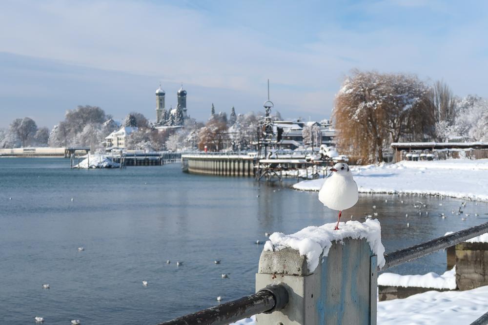 Schnee Spaziergang Friedrichshafen am Bodensee Januar 2021 hyyperlic-42