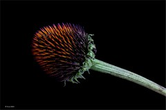 ... those who are prickly on the outside might be just as sweet as you ...