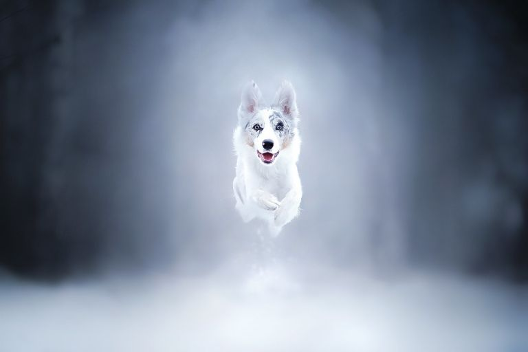 Happy in Winter!