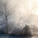 Fog Almid Sumrise