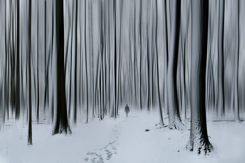 Lost In the Winter Woods