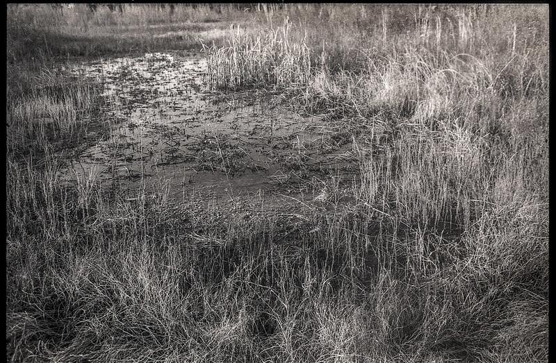 standing water, muddy pathway, grasses, abandoned field, River District, Asheville, NC, Minolta XG-M, Super Albinon 28mm f-2.8, Fomapan 400, HC-110 developer, 1.16.21