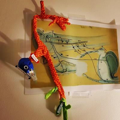 4. Neurone tricolore de l'arc réflexe
