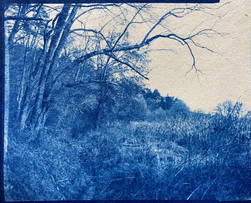 cyanotype, landscape, Biltmore Estate, Asheville, NC, Graflex Crown Graphic, 4x5, late 2020