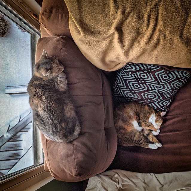Sugar and Spice, napping on the Chaise Longue