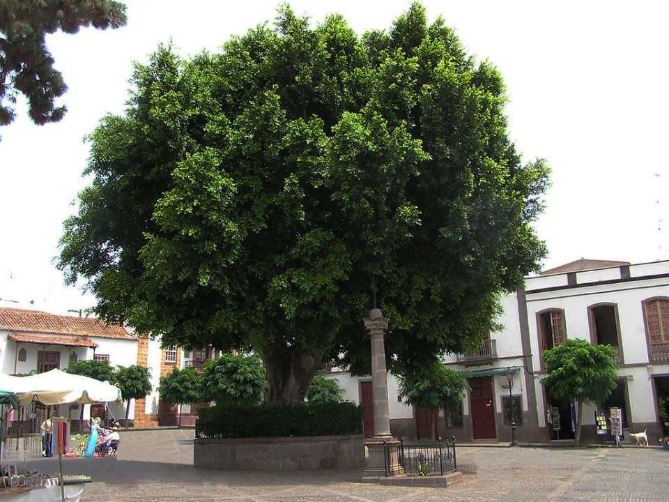 Cruz Verde Cruz de hierro en columna en Plaza de Nuestra Señora del Pino Teror Gran Canaria Islas Canarias 03