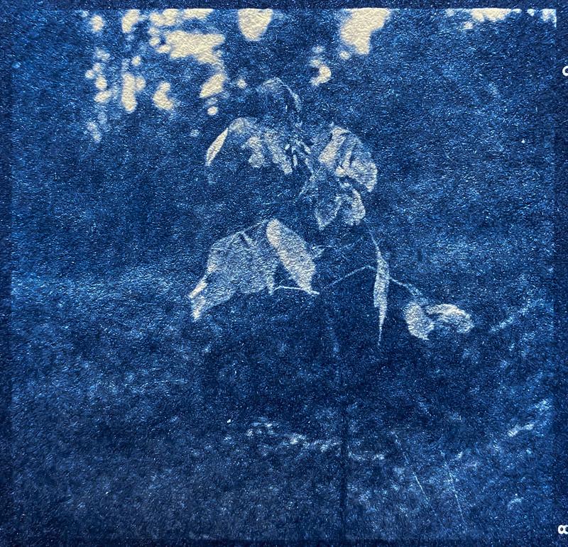 autumn sapling, Hominy Creek River Park, Asheville, NC, cyanotype, natural fiber hot press paper, Ricohflex Dia M, Arista.Edu 400, HC-110 developer, 10.23.20 (1 of 1)
