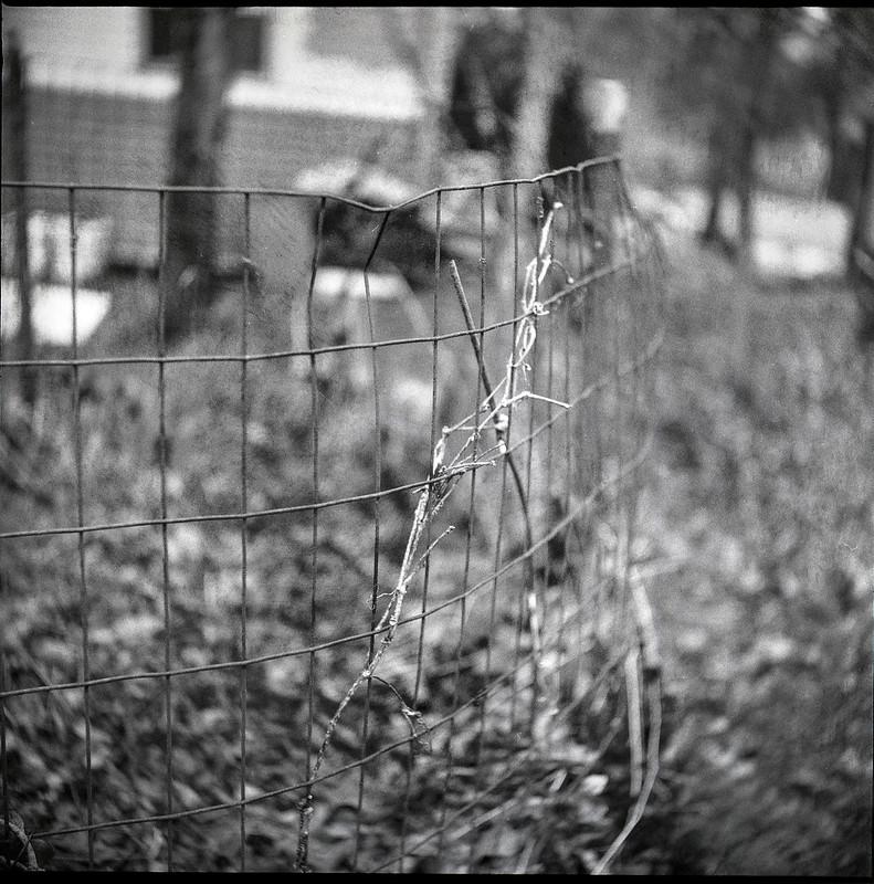wire fence, compost bin, dried vine, yard, Asheville, NC, Ricohflex Dia M, Fomapan 400, Moersch Eco developer, 2.20.21