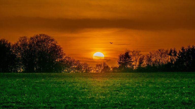 Sunset reflecting on Wet Grass