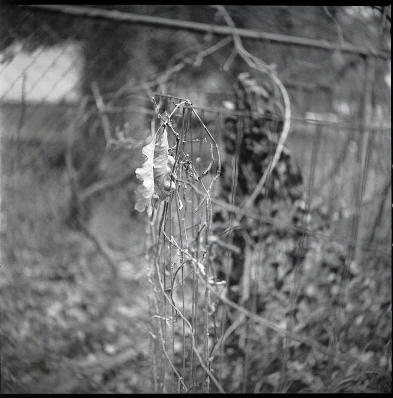 metal fences, dried branches, vines, leaves, compost bin, yartd, Asheville, NC, Ricohflex Dia M, Fomapan 400, Moearsch Eco film developer, 2.20.21