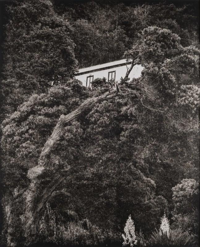 Tree House, São Miguel Azores