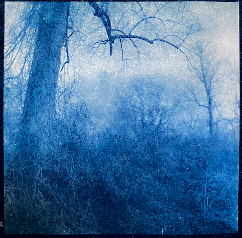 Cyanotype version, from 6x6 medium format film negative, knarly tree limb, winter landscape, Biltmore Estate, Asheville, NC, Yashica D, Fomapan 400, Moersch Eco developer, photographed- 2.28.21 contacdt print- 3.29.21