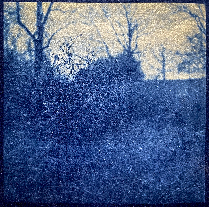 cyanotype version- dried floral forms, winter landscape, Biltmore Estate, Asheville, NC, Yashica D, Fomapan 400, Moersch Eco film developer, 2.28.21